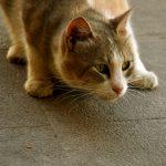 Des conseils pour éviter le stress chez le chat